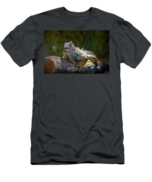Snoozing Iguana Men's T-Shirt (Athletic Fit)