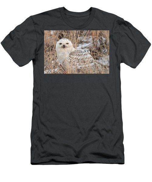 Snowy Owl Men's T-Shirt (Slim Fit) by Nancy Landry