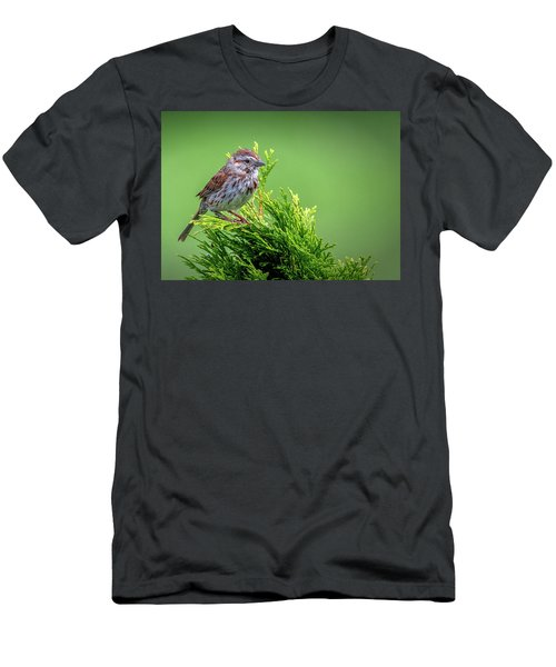 Song Sparrow Perched - Melospiza Melodia Men's T-Shirt (Athletic Fit)