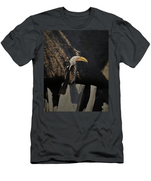 Southern Yellow Billed Hornbill Men's T-Shirt (Athletic Fit)