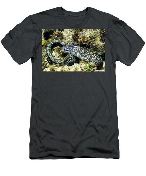 Spotted Moray Eel Men's T-Shirt (Athletic Fit)