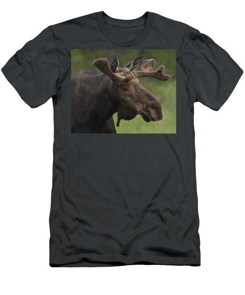 Spring Bull Men's T-Shirt (Athletic Fit)