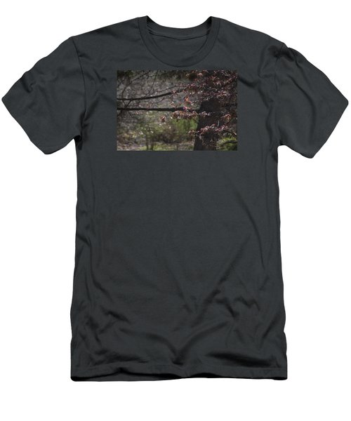 Spring Crabapple Men's T-Shirt (Slim Fit) by Morris  McClung