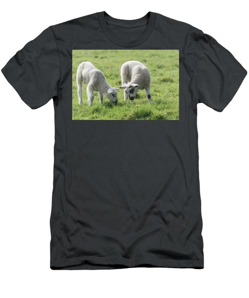 Men's T-Shirt (Slim Fit) featuring the photograph Spring Lambs by Scott Carruthers