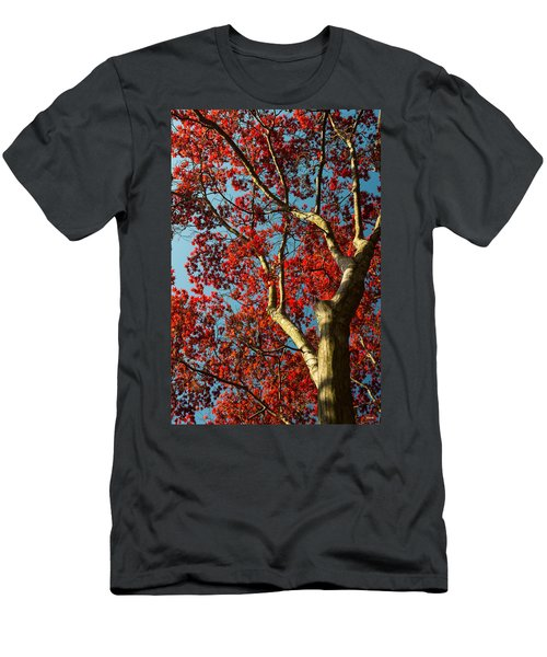 Spring Maple Men's T-Shirt (Athletic Fit)