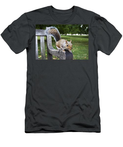 Squirrel Bench Men's T-Shirt (Athletic Fit)