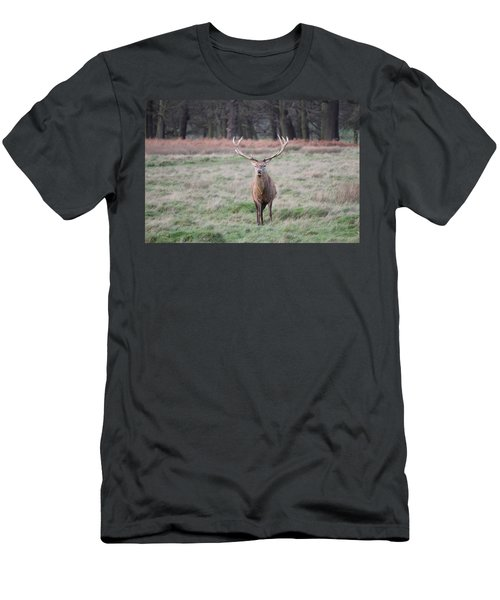 Stag In Richmond Park Men's T-Shirt (Athletic Fit)