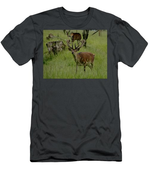 Stag Of The Herd. Men's T-Shirt (Athletic Fit)