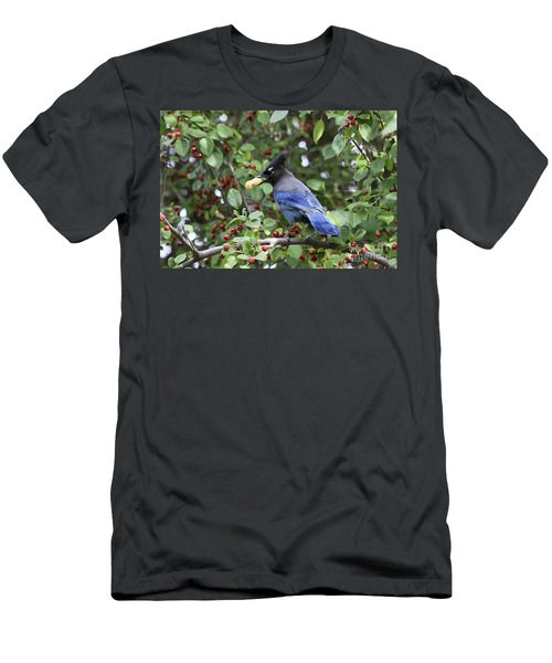 Steller's Jay Men's T-Shirt (Athletic Fit)