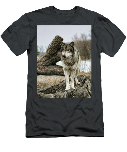 Still Wolf Men's T-Shirt (Athletic Fit)