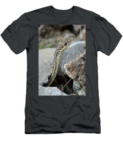Striped Whipsnake, Masticophis Taeniatus Men's T-Shirt (Athletic Fit)