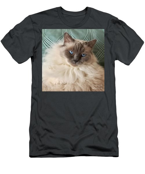 Sugar My Ragdoll Cat Men's T-Shirt (Athletic Fit)