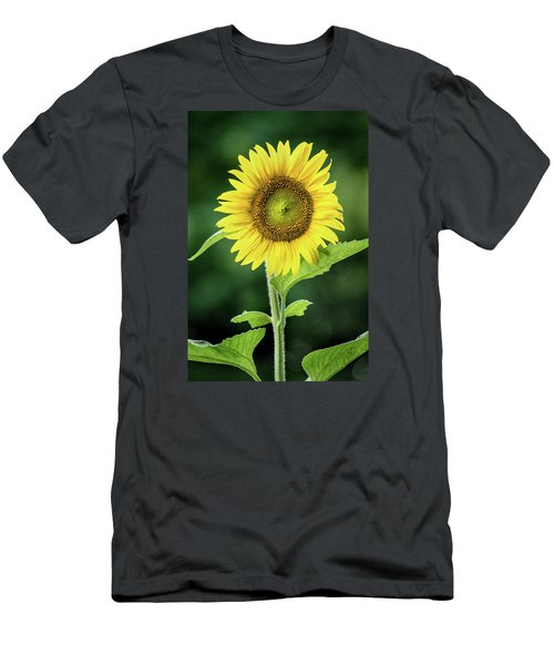 Sunflower In Bloom Men's T-Shirt (Athletic Fit)