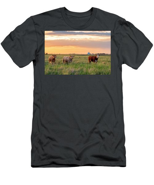 Sunset Cattle Men's T-Shirt (Athletic Fit)