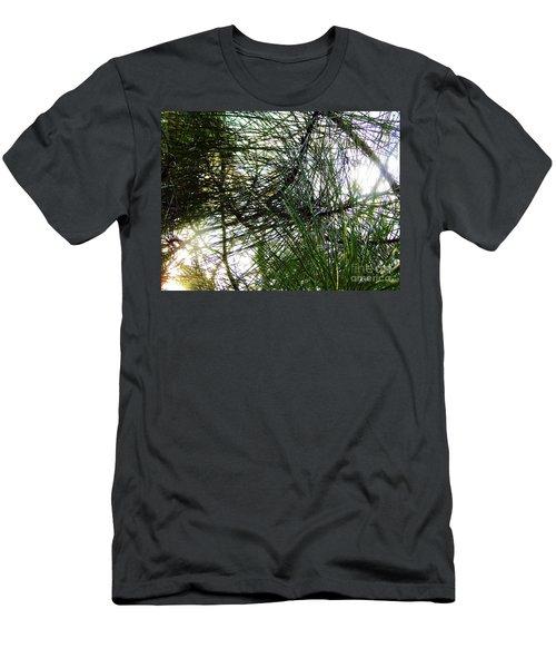 Sunshine Through Pine Needles Men's T-Shirt (Athletic Fit)