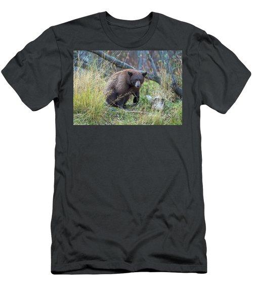 Surprised Bear Men's T-Shirt (Athletic Fit)