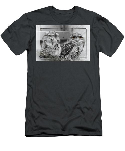 Tawney Frogmouths Men's T-Shirt (Athletic Fit)