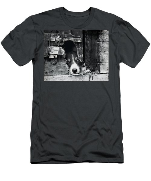 Working Border Collie Dog. Men's T-Shirt (Athletic Fit)
