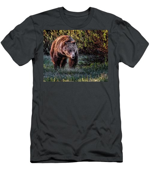 Teton Grizzly Men's T-Shirt (Athletic Fit)