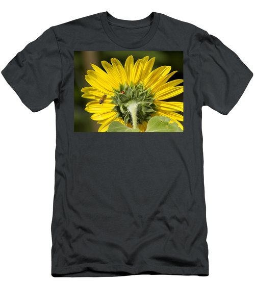 The Bee Lady Bug And Sunflower Men's T-Shirt (Athletic Fit)