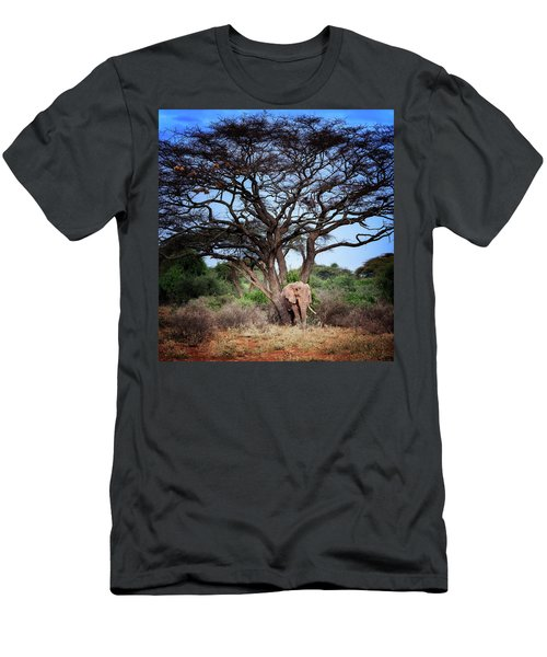 The Elephant Tree Men's T-Shirt (Athletic Fit)
