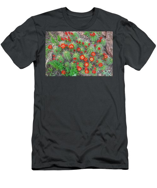 The First Week Of May, Claret Cup Cacti Begin To Bloom Throughout The Colorado Rockies.  Men's T-Shirt (Athletic Fit)