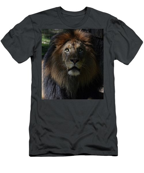 The King In Awe Men's T-Shirt (Athletic Fit)