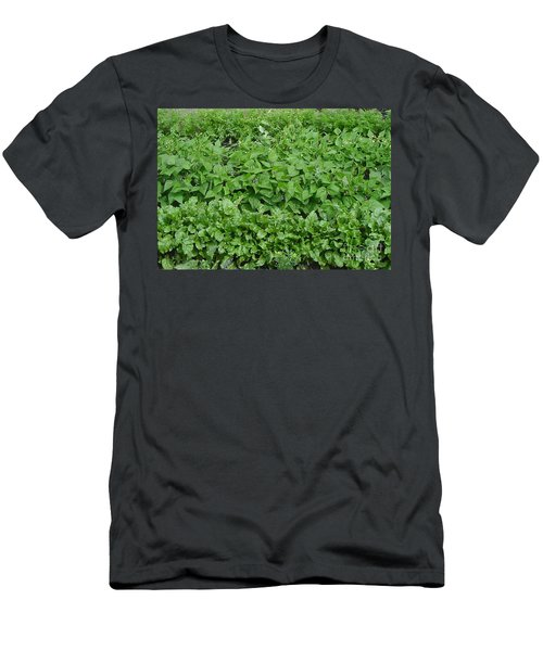 The Market Garden Landscape Men's T-Shirt (Athletic Fit)