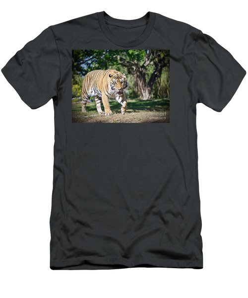 Men's T-Shirt (Slim Fit) featuring the photograph The Prowler by Judy Kay