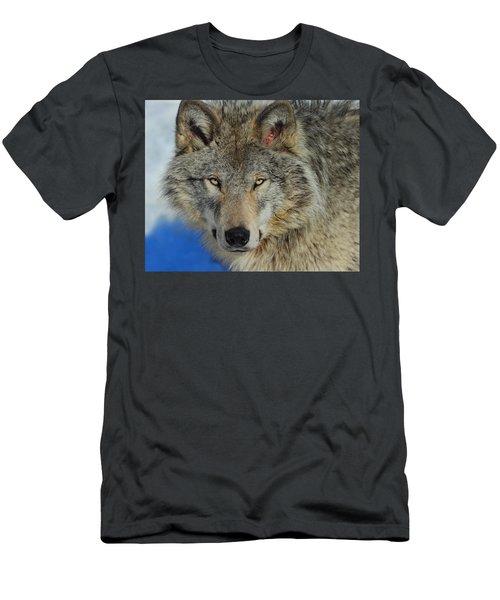 Timber Wolf Portrait Men's T-Shirt (Athletic Fit)