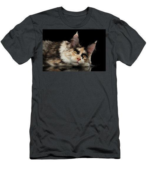 Men's T-Shirt (Athletic Fit) featuring the photograph Tired Maine Coon Cat Lie On Black Background by Sergey Taran