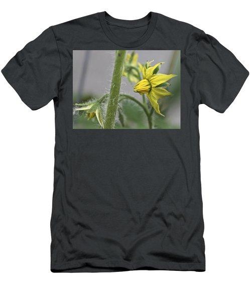 Tomato Babies 3 Men's T-Shirt (Athletic Fit)