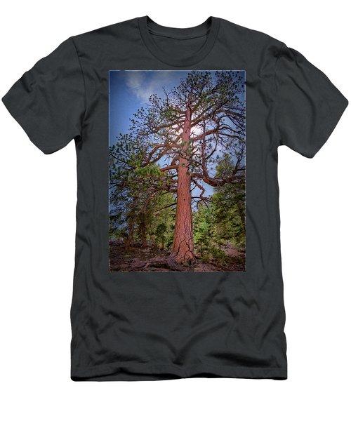Tree Cali Men's T-Shirt (Athletic Fit)