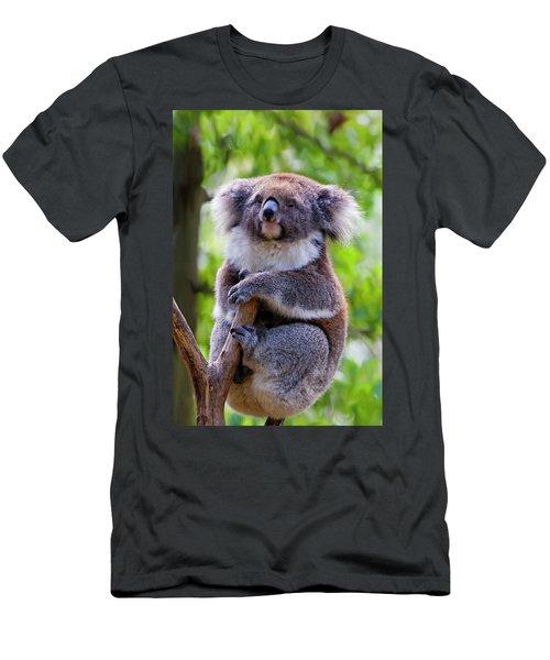 Treetop Koala Men's T-Shirt (Athletic Fit)