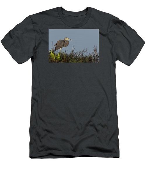 Tri-colored Heron In The Morning Light Men's T-Shirt (Athletic Fit)
