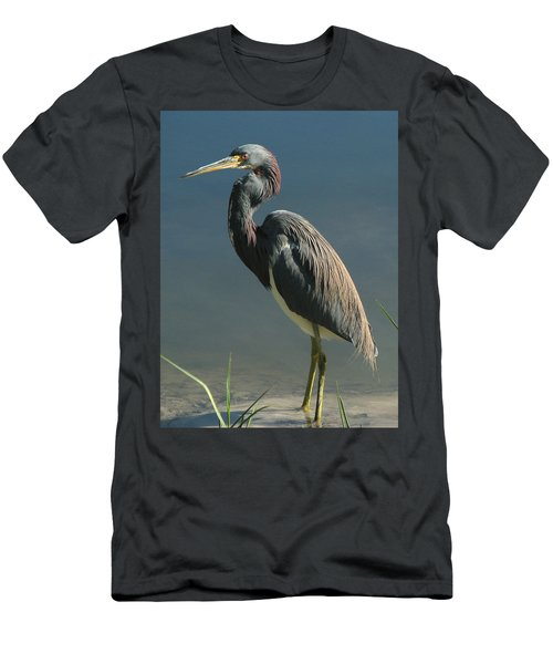 Tricolored Heron Men's T-Shirt (Athletic Fit)