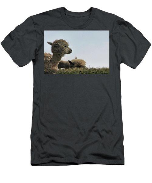 Two Alpaca Men's T-Shirt (Slim Fit) by Pat Cook