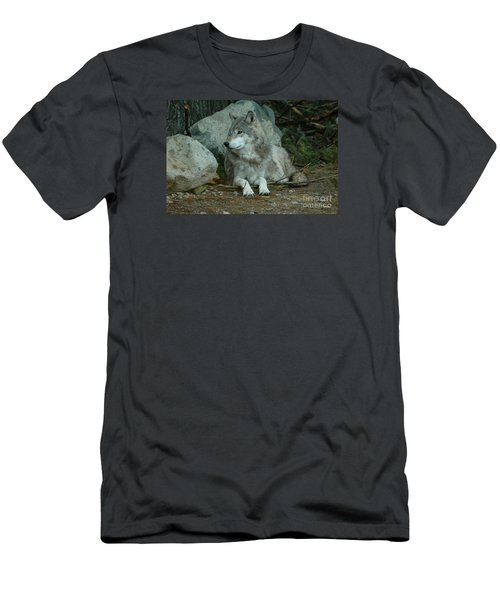 Watchful Wolf Men's T-Shirt (Slim Fit) by Sandra Updyke