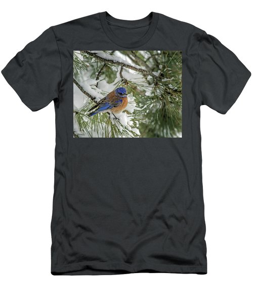 Western Bluebird In A Snowy Pine Men's T-Shirt (Athletic Fit)