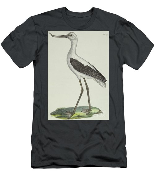 White Headed Avocet Men's T-Shirt (Athletic Fit)