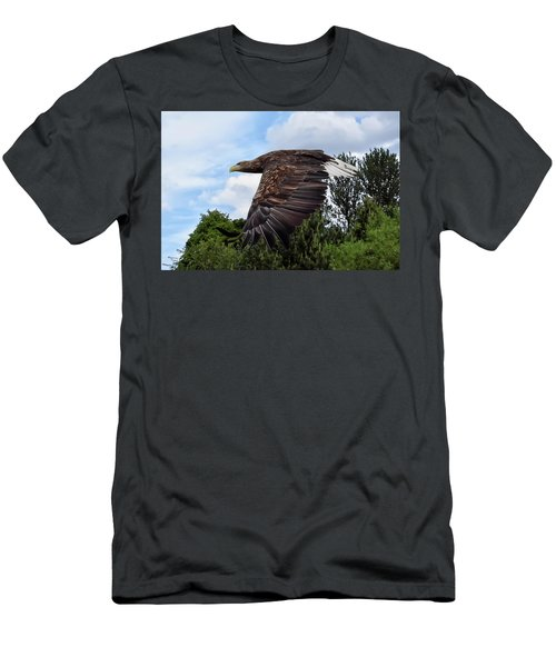 White Tailed Eagle Men's T-Shirt (Athletic Fit)