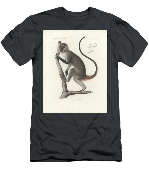 White Throated Guenon, Cercopithecus Albogularis Erythrarchus Men's T-Shirt (Athletic Fit)