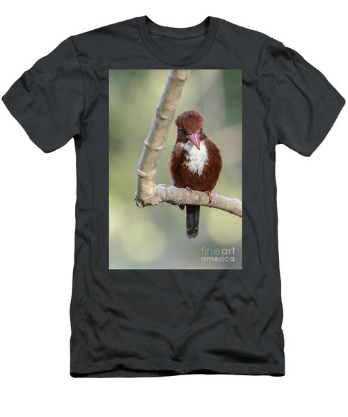 White-throated Kingfisher 01 Men's T-Shirt (Athletic Fit)