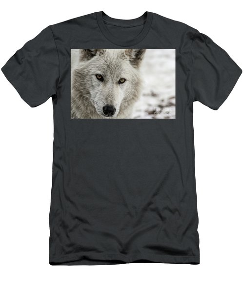 White Wolf II Men's T-Shirt (Athletic Fit)