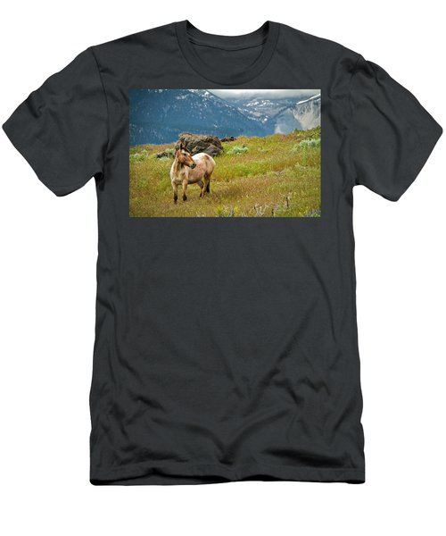 Wild Appaloosa Horse Men's T-Shirt (Athletic Fit)