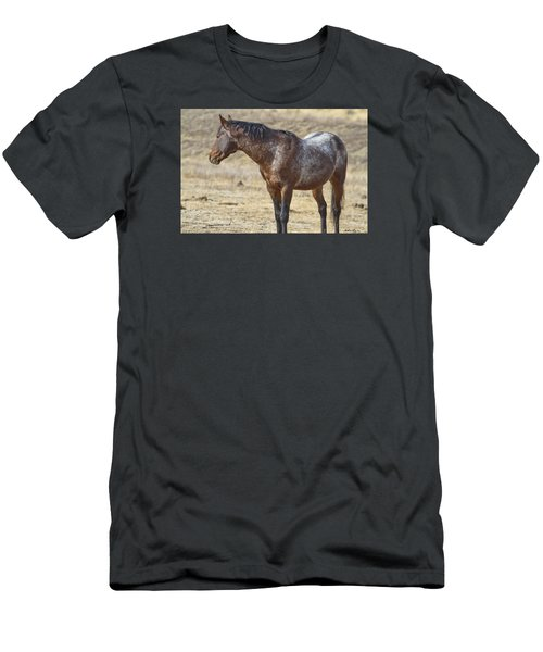 Wild Appaloosa Mustang Stallion Men's T-Shirt (Athletic Fit)