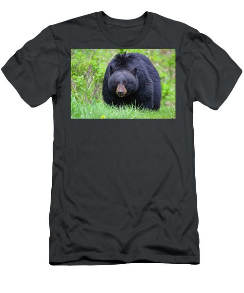 Wild Black Bear Men's T-Shirt (Athletic Fit)