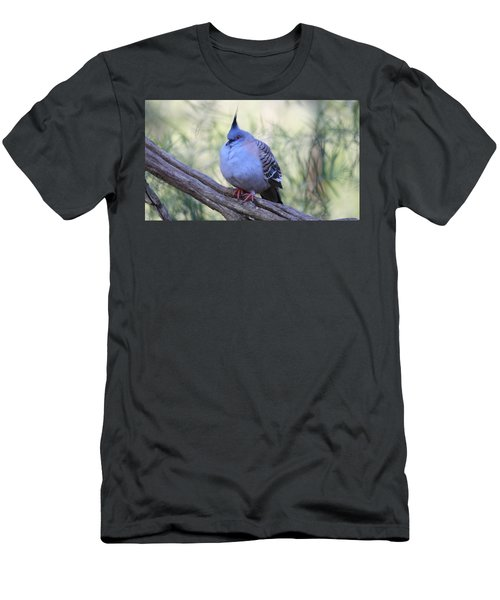 Wild Pigeon Men's T-Shirt (Athletic Fit)