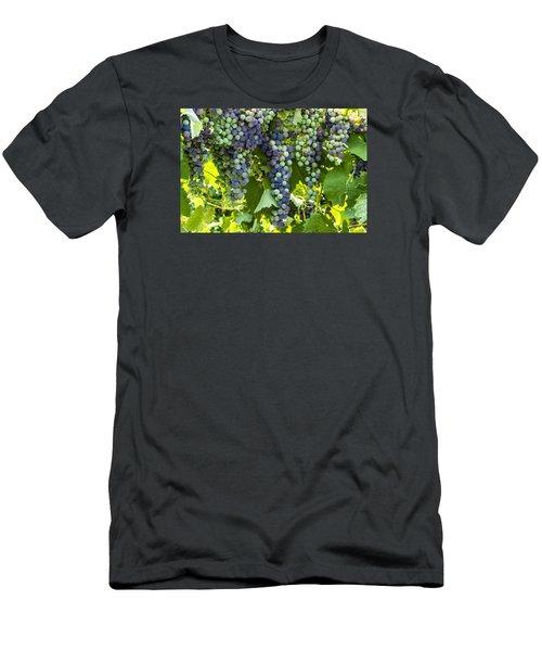 Wine Grape Colors Men's T-Shirt (Slim Fit) by Teri Virbickis