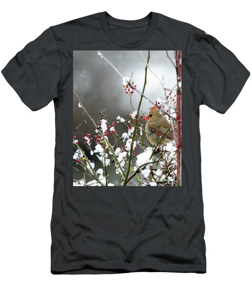 Winter Cardinal Men's T-Shirt (Slim Fit) by Gary Wightman